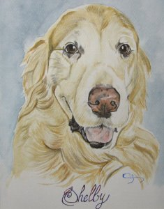 aquarelle-golden-retriever