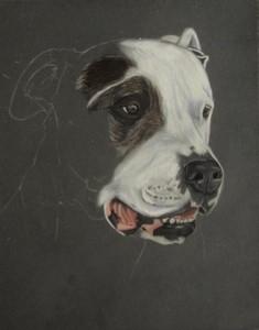 dessiner dogue argentin