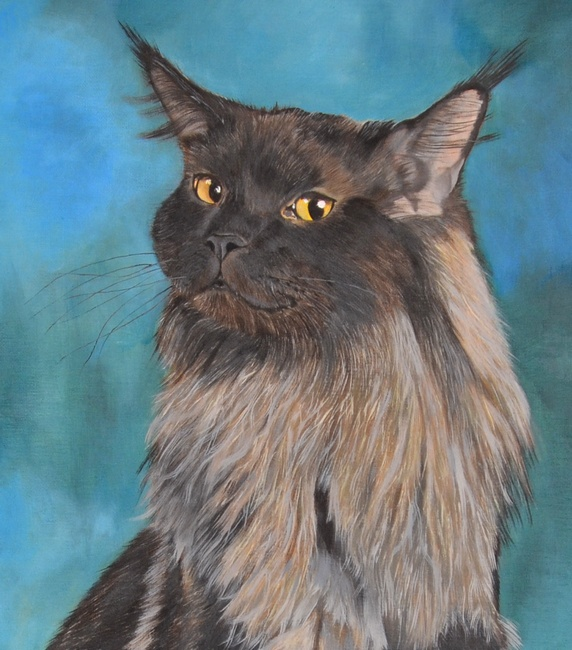 portrait maine coon