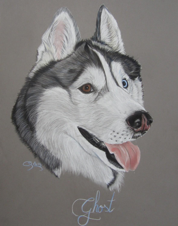 portrait husky