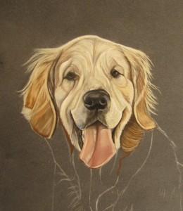 Portrait de golden retriever - Dessin golden retriever ...