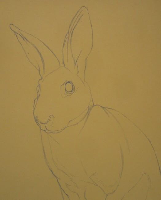 dessin lapin