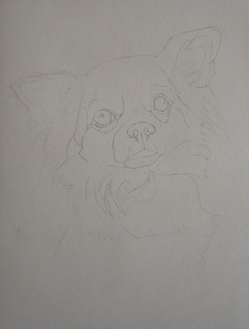 dessin chihuahua