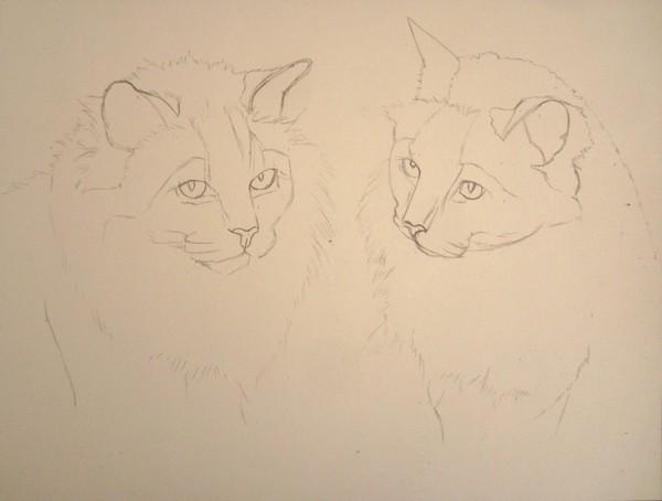 dessiner des chats