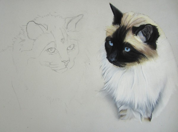 comment dessiner chat