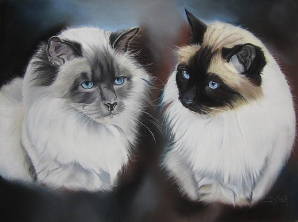 tableau de chat