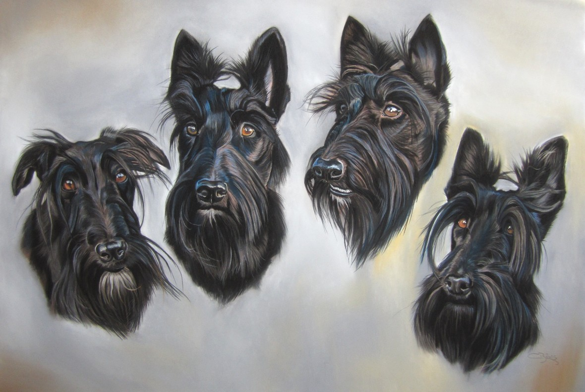 tableau de scottish terrier