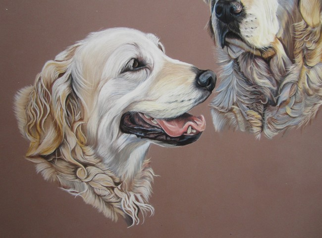 golden retriever pastels