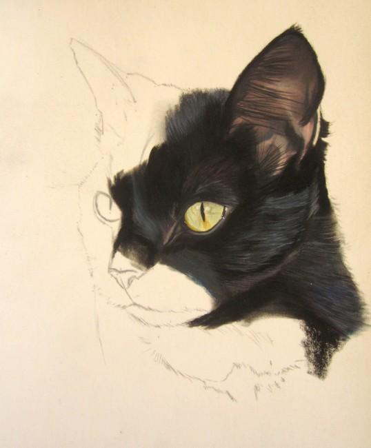 dessiner chat noir