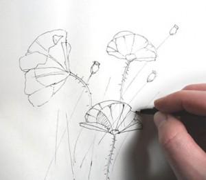 dessin coquelicots