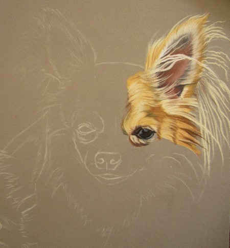comment dessiner chihuahua