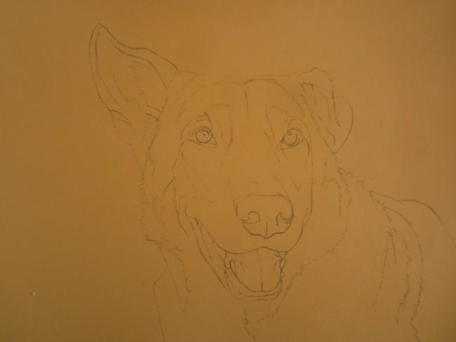 chien loup portrait