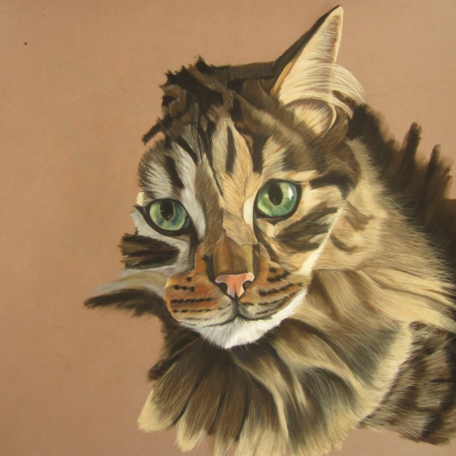 portrait chat norvégien