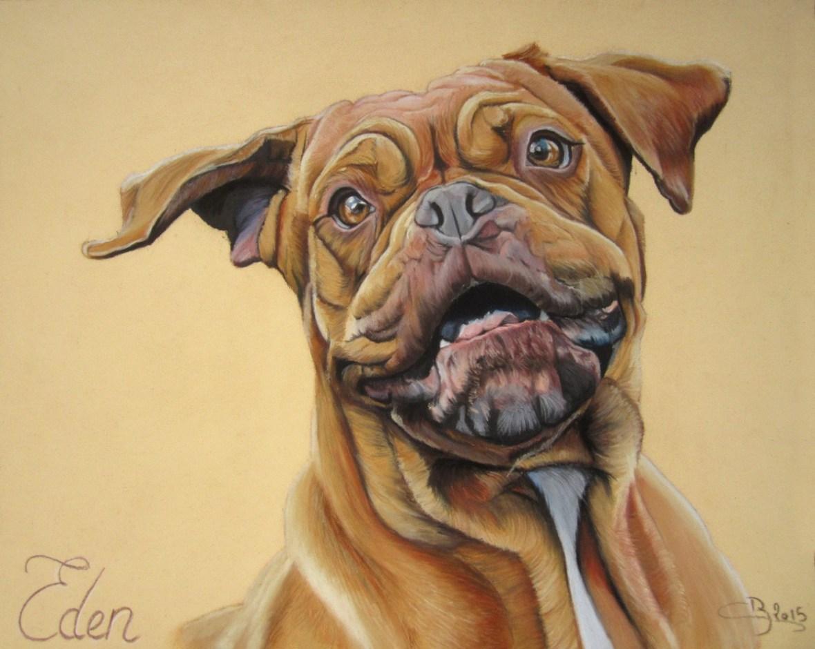portrait de dogue de bordeaux