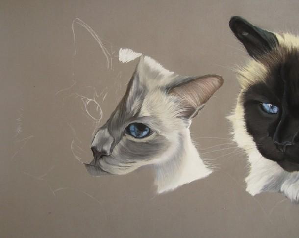 peindre les chats
