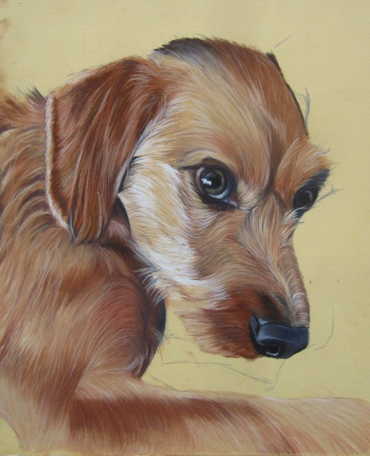 pastels canins