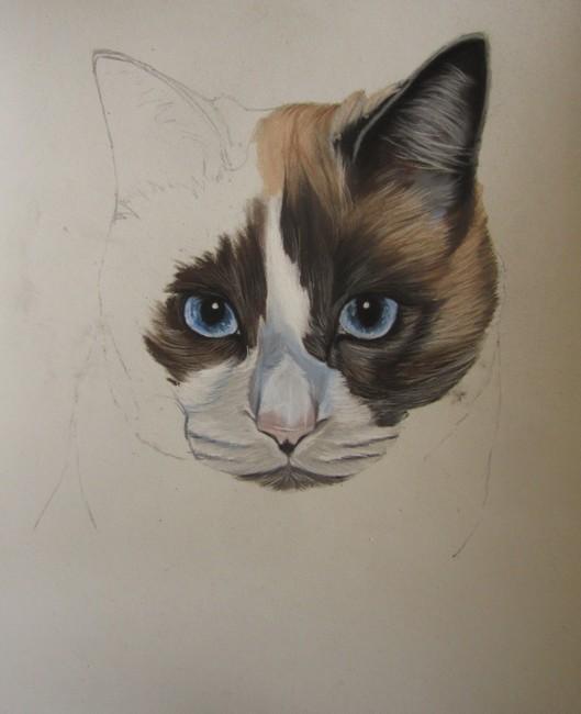 chat aux pastels
