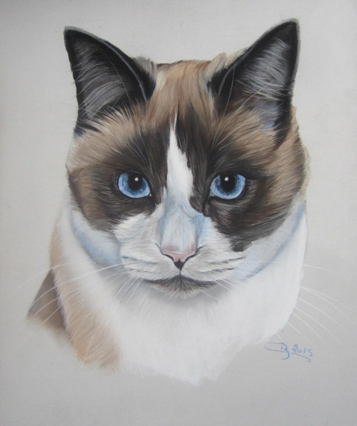 chat tricolore aux pastels