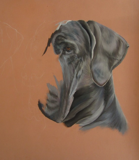 dogue aux pastels