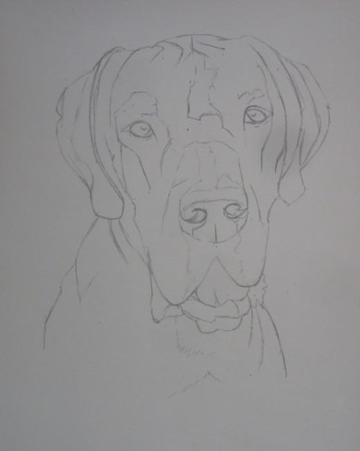 dessin dogue allemand