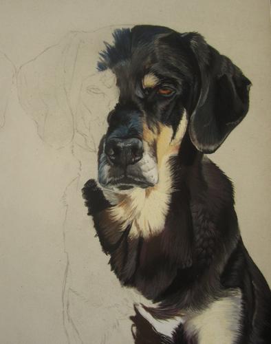 peindre chien pastel