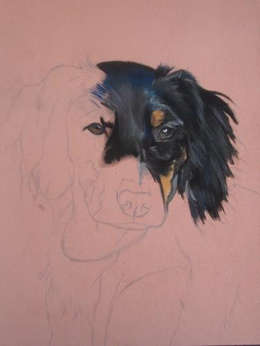 portrait chien epagneul