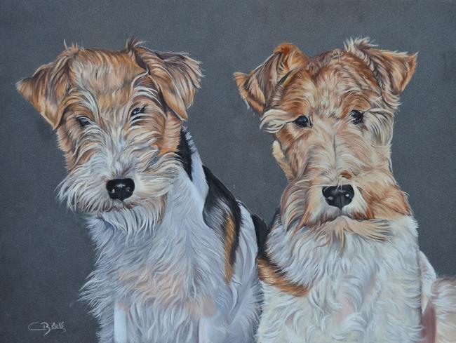 portraits de fox terrier