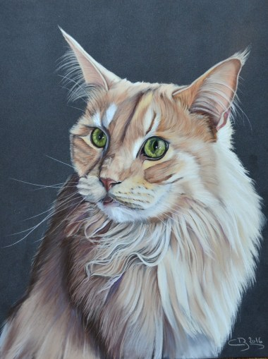 maine coon pastel