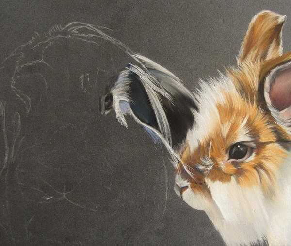 dessiner lapin
