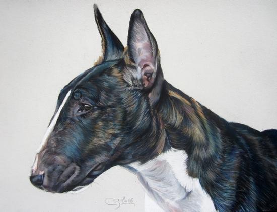 pastels secs bull terrier portrait