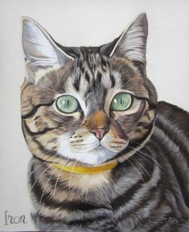 chat-tigre-pastels