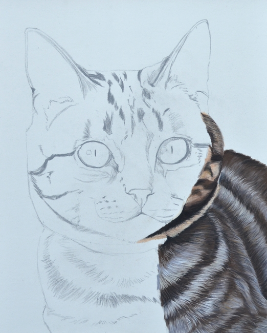 dessin-chat-pastel