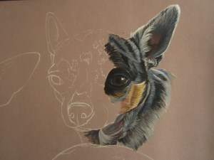 dessiner-chihuahua