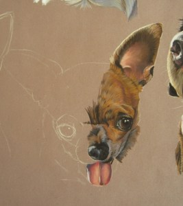 peindre-chihuahua