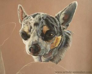 portrait-chihuahua