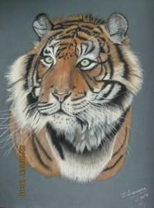 tigre-josiane