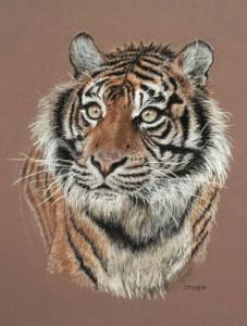tigresse-jocelyne