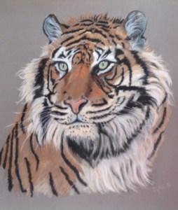 tigresse-sylvie