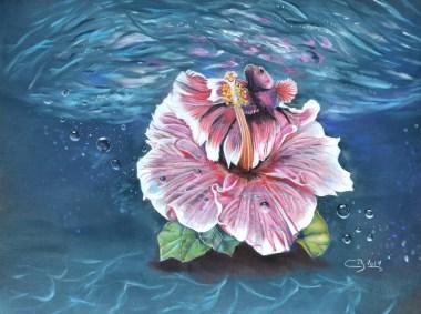 betta-hibiscus2