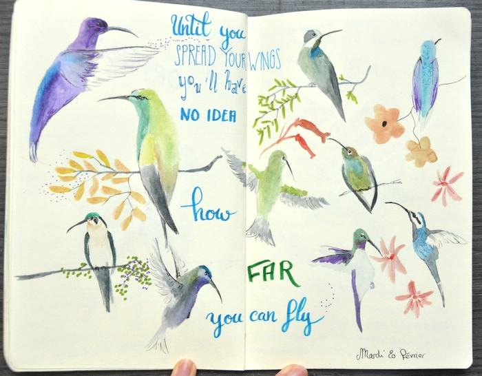 croquis colibris