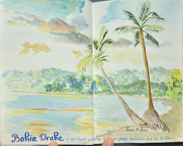 croquis palmiers plage