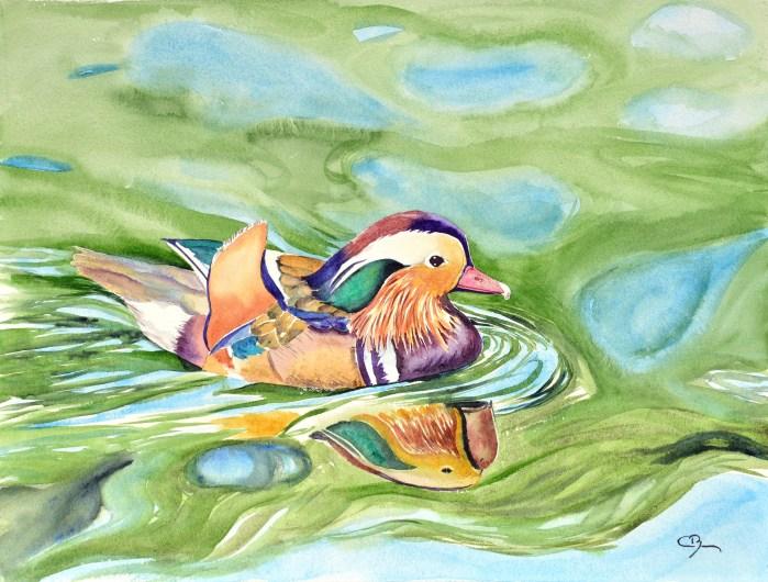 aquarelle canard mandarin