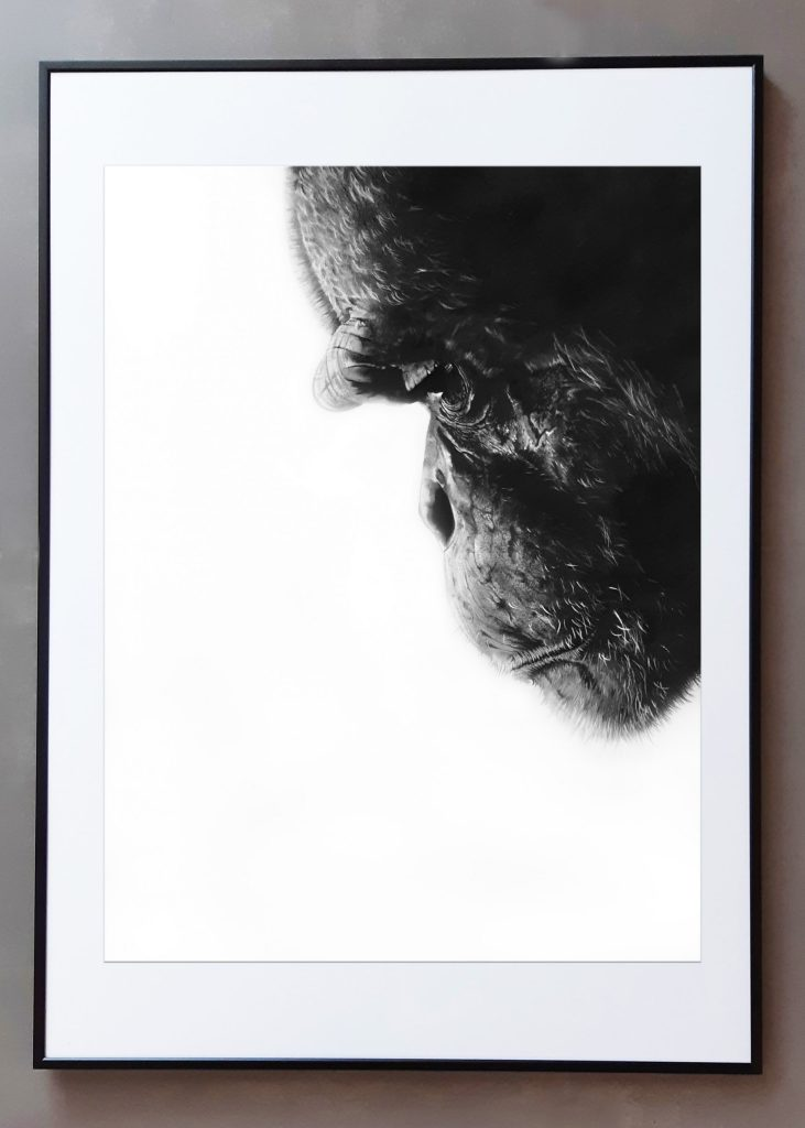 VOGEL CLAIRE-regard sur le monde-graphite_mine à plomb-60×80 cm
