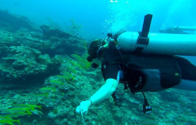 Similan Islands - School of Fish