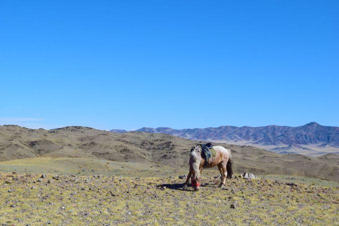 Pony in Mongolia