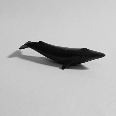 Greyscale image of a whale toob on a black background