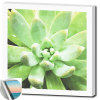 succulents-wall-art-print