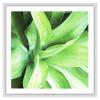 succulents-wall-art-print