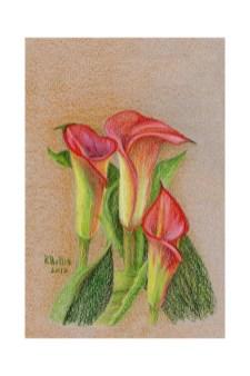 """Calla Lilies 5""""x 7"""" $75"""