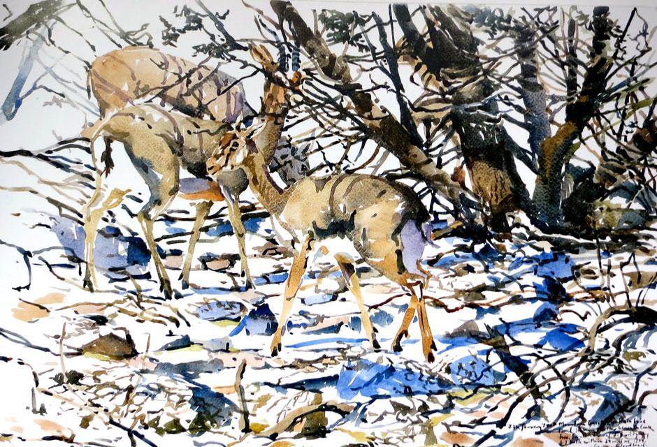 Darren Woodhead - Gazelles
